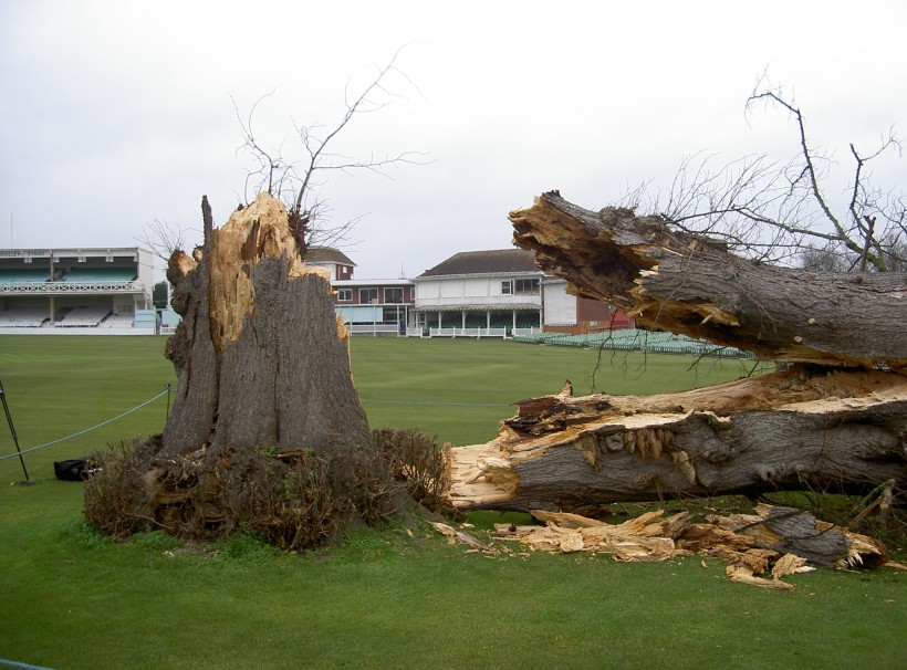 The Lime Tree's demise: ten years on